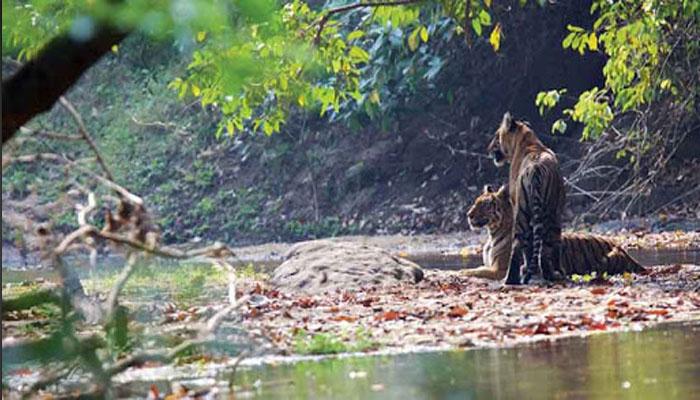 പറമ്പിക്കുളം വന്യജീവി സംരക്ഷണ കേന്ദ്രത്തിലേക്ക് ഒരു യാത്ര
